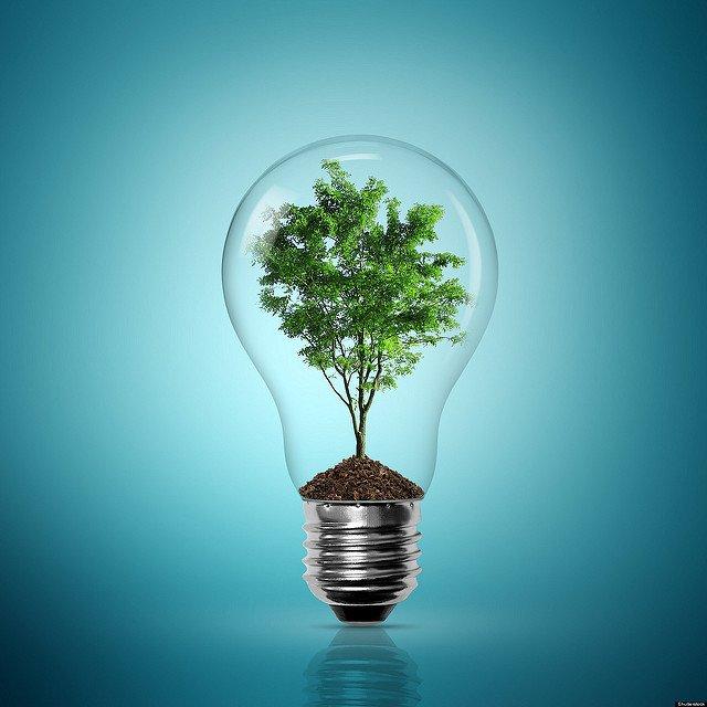Un arbre dans une ampoule en verre.